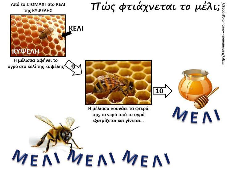 Δραστηριότητες, παιδαγωγικό και εποπτικό υλικό για το Νηπιαγωγείο & το Δημοτικό: Μέλισσες στο Νηπιαγωγείο: Πώς φτιάχνουν οι μέλισσες το μέλι; Σχεδιαγραμματική απεικόνιση - Πίνακας Αναφοράς