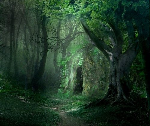 Forest Portal, The Enchanted Wood