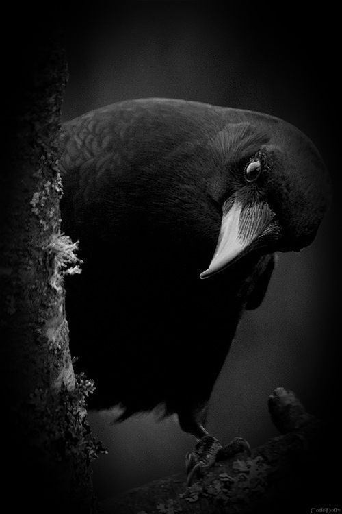 Then this ebony bird beguiling my sad fancy into smiling, by the grave and stern decorum of the countenance it wore, 'though thy crest be shorn and shaven thou', I said, 'art sure....'