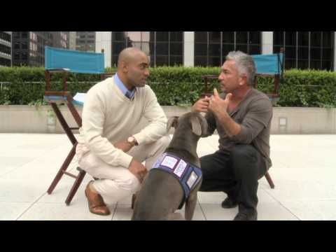 Getting Over The Fear of Dogs with Cesar Millan