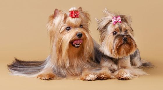 Karmy dla psów ras małych:  http://kakadu.pl/Karmy-dla-psow/karmy-dla-psow-ras-maych.html