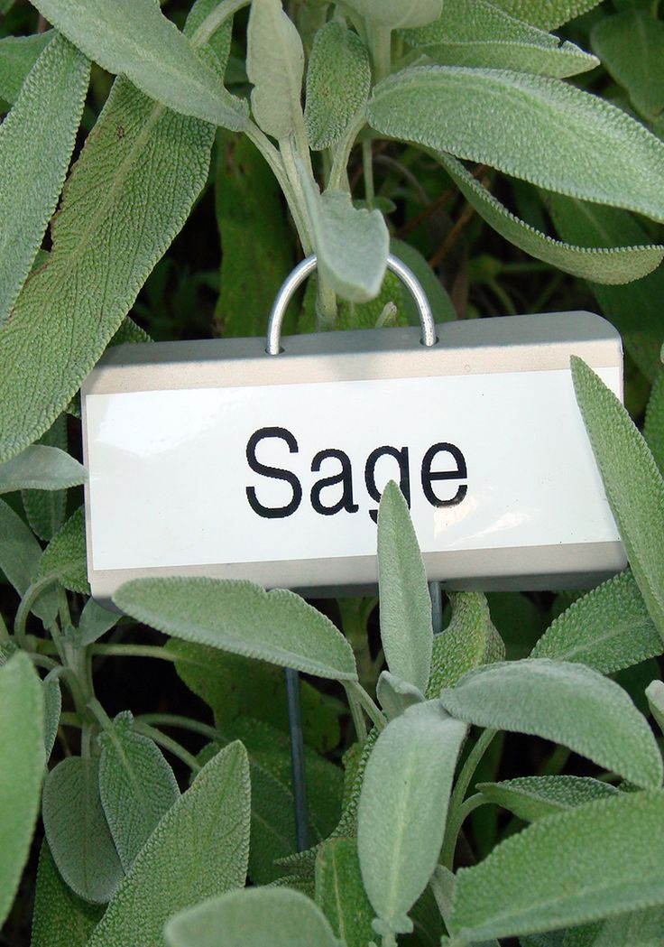 Efectele benefice ale ceaiului de salvie sunt cunoscute inca din antichitate cand era utilizat pentru vindecarea a peste 60 de afectiuni. Salvia are proprietati antiseptice, de aceea este recomandata in cazul gripei si a racelii.