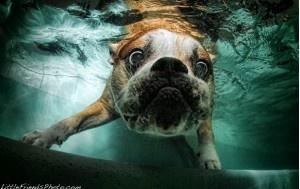 Hund unter Wasser