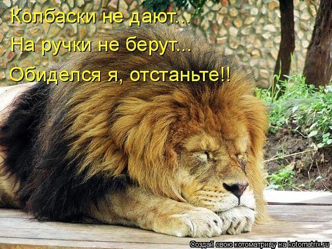 @Bagira_02 споки ночи Татьяна