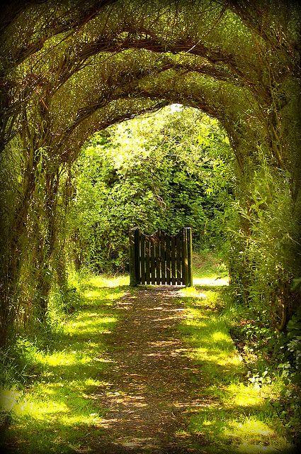 :): Modern Gardens, Trees Tunnel, Gardens Paths, Gardens Design Ideas, Beautiful, Gardens Gates, Places, Pathways, The Secret Gardens