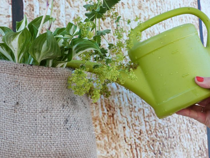 recycled bag (blankets, former sacks carrying coffee, tea or cocoa) for poster plants.