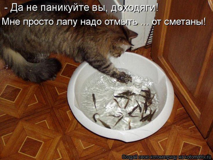 Смотреть смешные картинки с надписями про котов