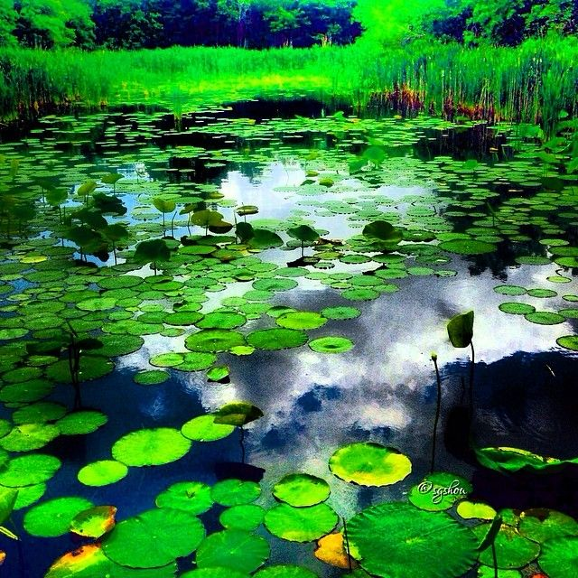 90 best images about texas state parks on pinterest for Sheldon lake fishing