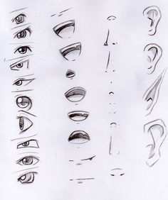 How To Draw A Nose Pinterest
