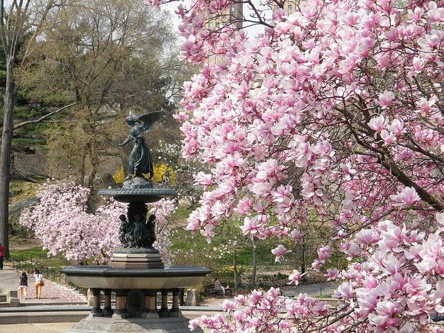 Image Result For Bethesda Sculpture Garden City Park