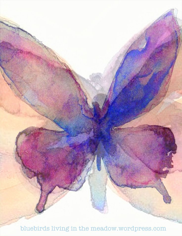 11 best watercolor butterflies images on