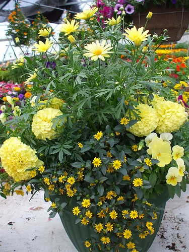 13 best images about monochromatic gardens and containers for Low maintenance garden pot plants