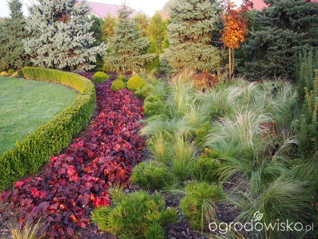 Marzenia i plany vs. rzeczywistość - strona 332 - Forum ogrodnicze - Ogrodowisko