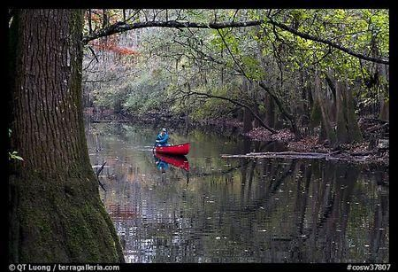 Traveler's Checklist: Congaree National Park   National Parks Traveler