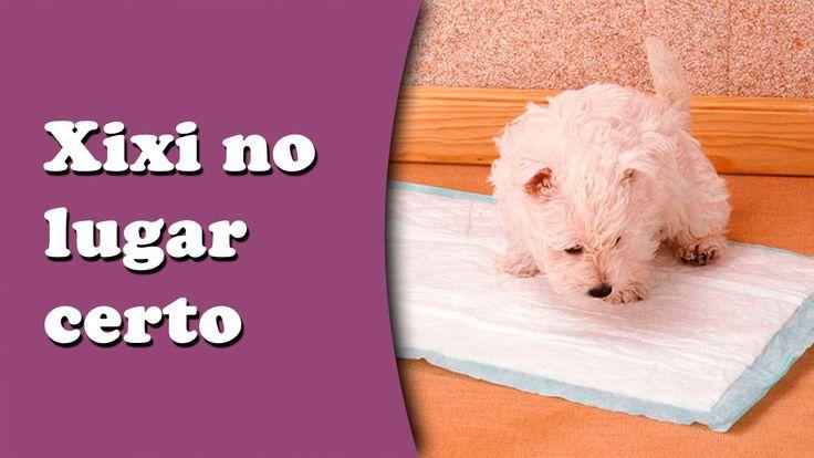 Como ensinar o cachorro a fazer xixi e suas necessidades no lugar certo