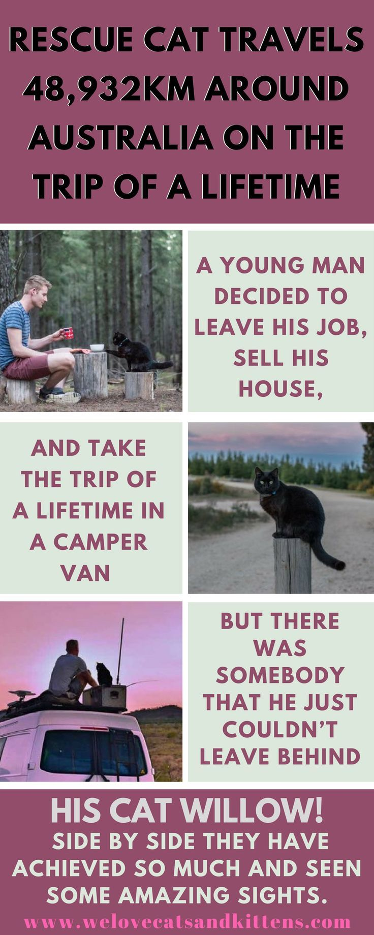 Rescue Cat Travels 48 932km Around Australia On The Trip Of A Lifetime Van Life Van Life Blog Cats Kittens