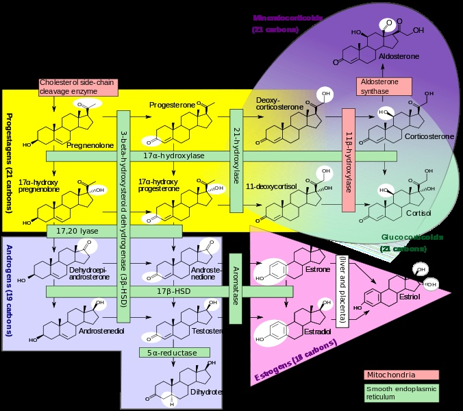 steroid synthesis organic chemistry