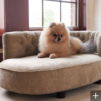 oh my Georgie Boy needs this!: Chai Lounges, Beds Furniture, Pet Products, Chaise Lounges, Large Dogs, Pomeranians, Dogs Chai, Fancy Dogs Beds, Fashion Pet Beds