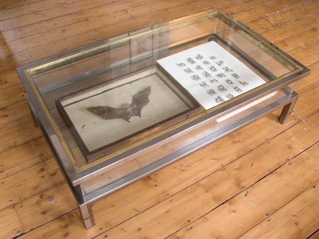Display Case Coffee Table Studio Inspiration Barbara Campbell NYC