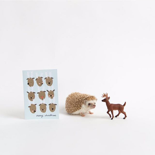 3⃣ more days! 🎄🎄🎄🎅🎅🎅🎁🎁🎁 #christmas #merrychristmas #hedgehog // 📷 by @ameliahedgehog + 🎨 by @oneplusonedesign