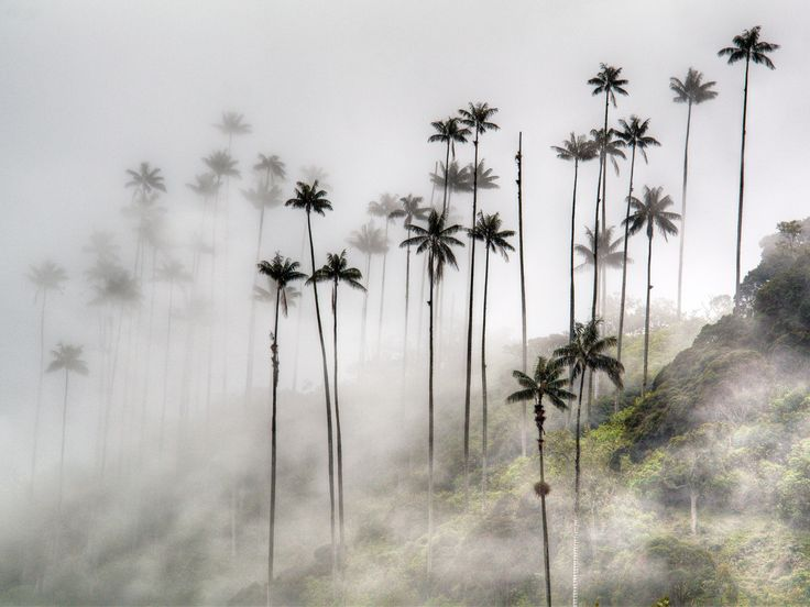 Think Andean peaks, tropical beaches, and dense rain forests sitting 3,000 feet above sea level.