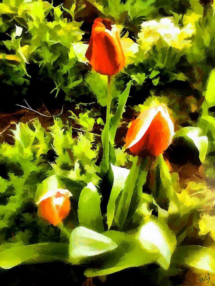 https://flic.kr/p/FUfPGv   Tulips in the garden   The flowers in the garden of my friend. Photos were taken of her.