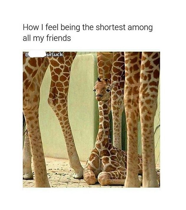 OMG yes I'm super short!I only know a few ppl who are shorter than me #humourquotes http://quotags.net/ppost/641129696923230920/