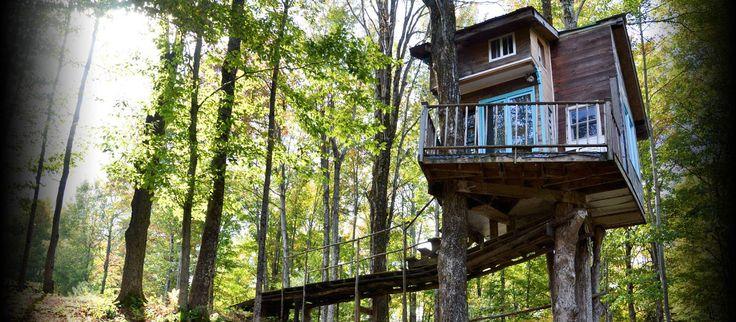 A Pequena Casa da Árvore de Fern Forest