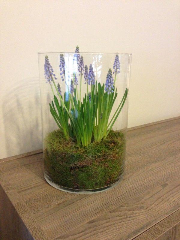 Grote vaas gevuld met vochtig steekschuim. In het midden uitgehold en bloembollen van blauwe druifjes erin gedaan. Vervolgens bekleed met mos en dan maar wachten tot de bloembollen uitkomen... :)