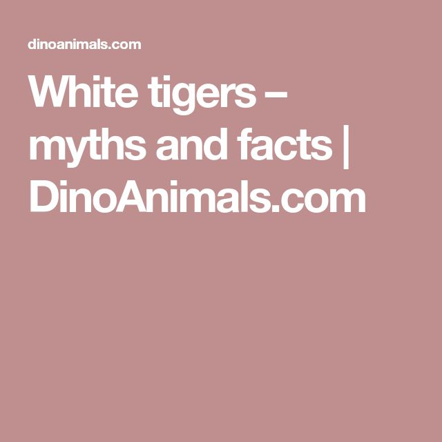 White tigers – myths and facts | DinoAnimals.com