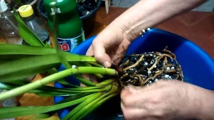 Recuperando e Salvando Orquídeas