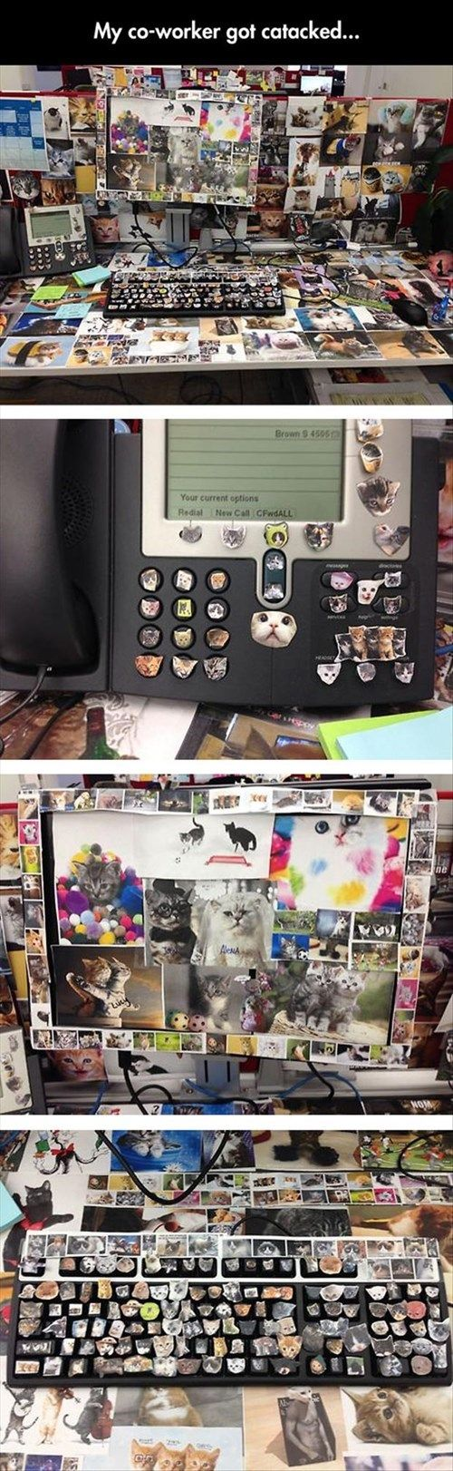 How many Cute Overload calendars were sacrificed to make this awesomely squee office prank? (via cameranerd)
