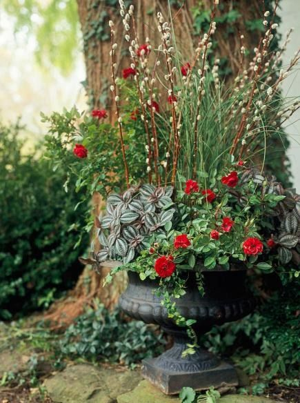 235 Best Images About Container Gardens On Pinterest