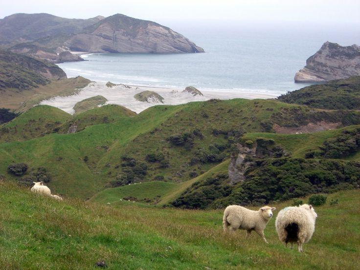 10 Gründe, warum Du einmal im Leben nach Neuseeland reisen MUSST - Go Girl! Run!
