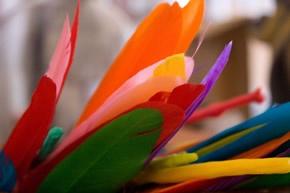 gorgeous feathers in tony cran's studio