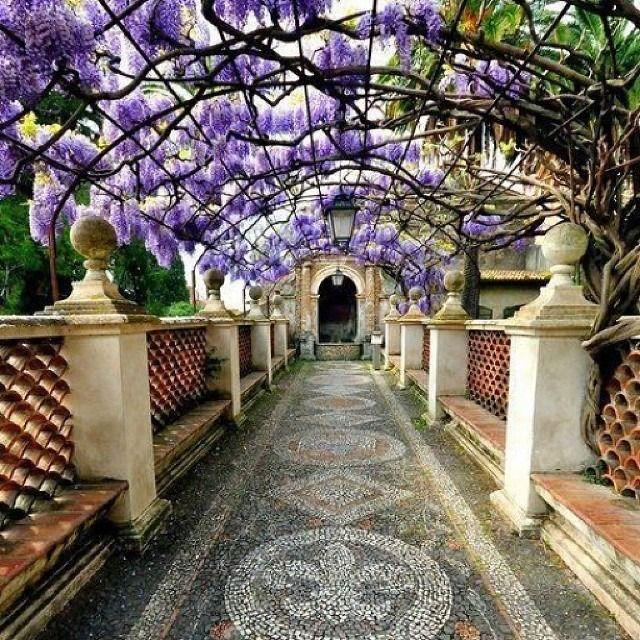 Helloooooooooo. .. #сказочных #арка #сад #глицинии #лавандовый #мозаика #Средиземноморья