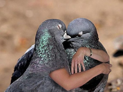 21 Pictures Of Birds With Arms: Animal Pictures, Birds Watches, Funny Birds, 21 Pictures, Beautiful Birds, Kiss Pigeon, Where, Feathers, Two Birds