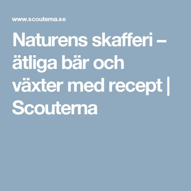 Naturens skafferi – ätliga bär och växter med recept | Scouterna