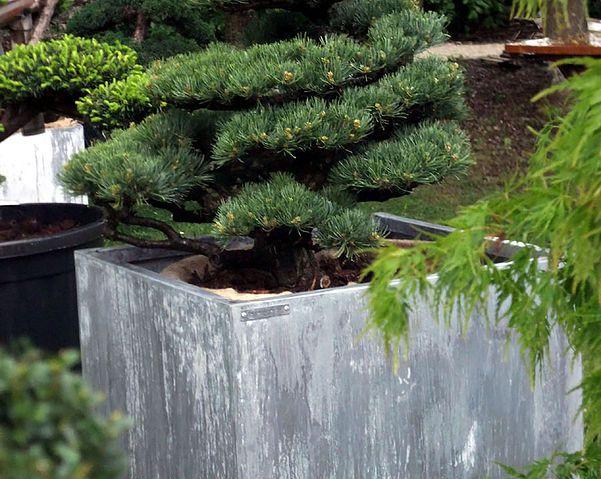 Jardinière en zinc fabriquées exclusivement sur mesure   Tonton Zingueur   #basileek #jardiniere #zinc