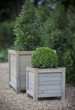 Another one from Crocus. I'm a sucker for not only this style of planter (bleached wood, clean lines) but for simple topiary.