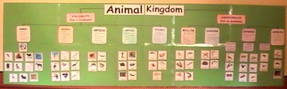 Classification of animals-animal kingdom bulletin board or station