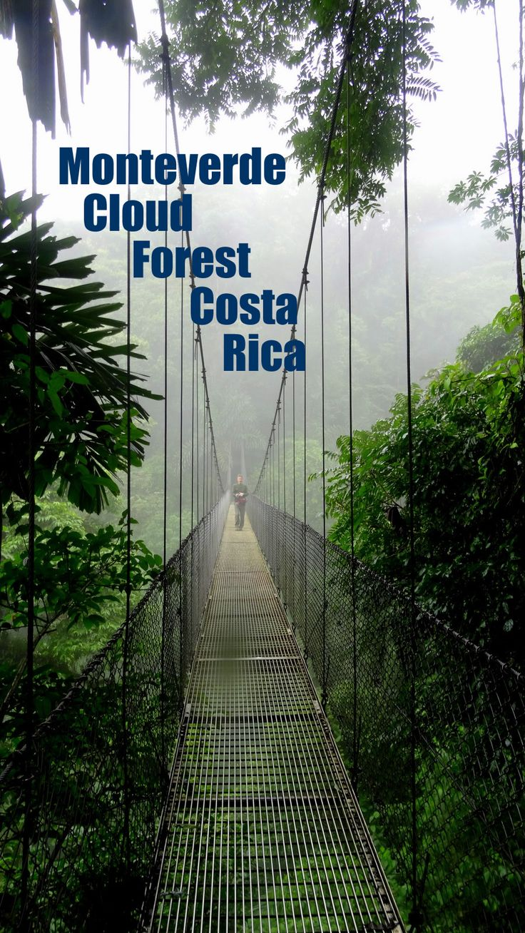 Hanging bridges tree top trails at Monteverde cloud forest in Costa Rica