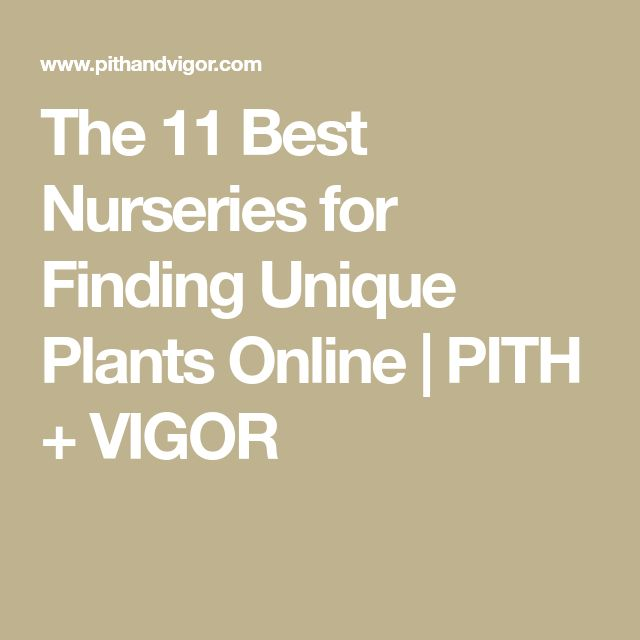 The 11 Best Nurseries for Finding Unique Plants Online | PITH + VIGOR