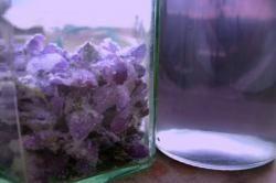 recette de cuisine sirop de violette maison