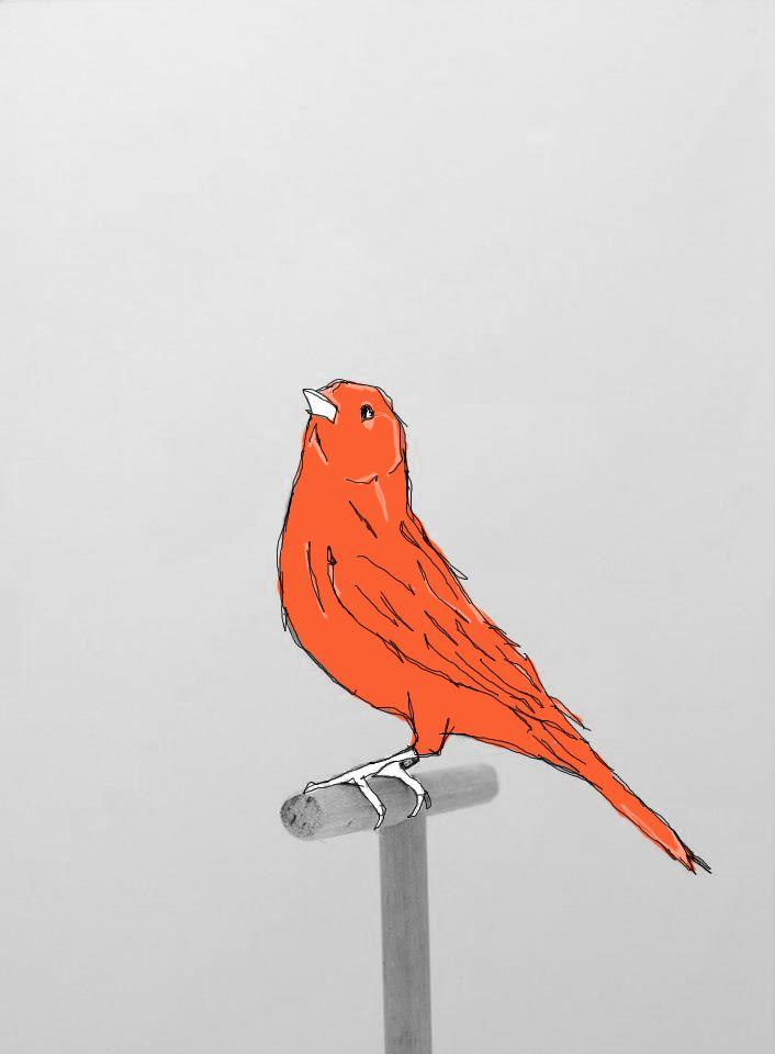 'Bird/Sketch', 2013.  (ryanjhughes).