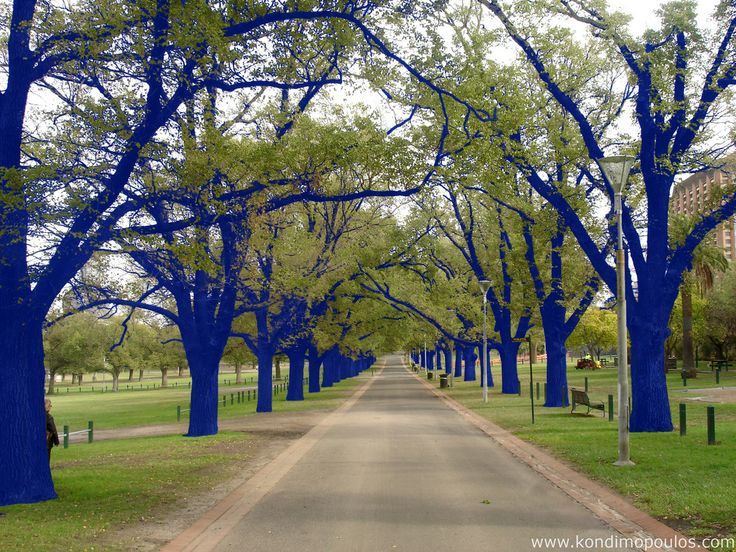 Blue trees installation art by Konstantin Dimopoulos: