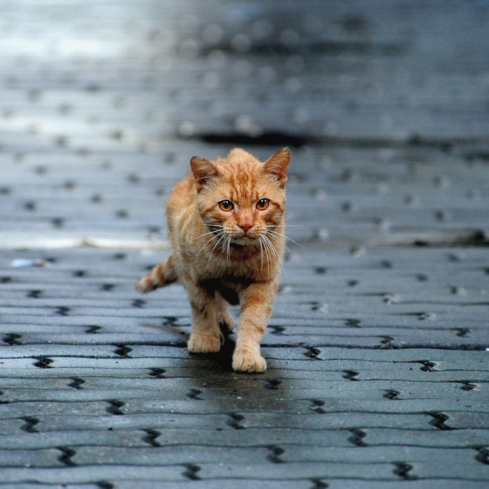 Warriors Into The Wild Full Movie: 179 Best Images About Warrior Cats! On Pinterest