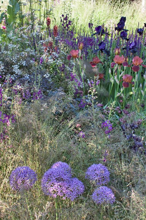 images of the cloudy bay sensory garden at the rhs chelsea flower show 2014