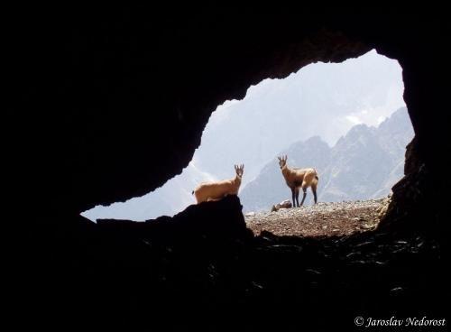 Kamzíčia jaskyňa: Najvyššie položená jaskyňa vBelianskych Tatrách, často vyhľadávaná turistami či fotografmi. Názov jej prislúcha aj vďaka tomu, že vjej okolí sa radi zdržiavajú kamzíky, ktoré tak môžete ľahko zahliadnuť