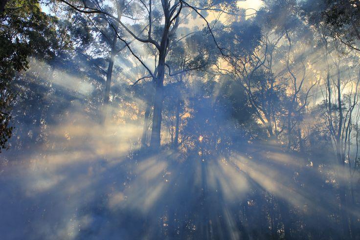 Capturing the Sunlight through the Karri trees @ Marima